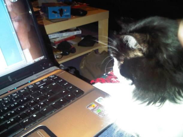 Eric the Cat